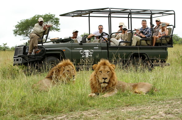 STRIKING WILDLIFE OF SOUTH AFRICA